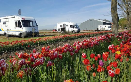 Kamperen tussen de tulpen in Noord-Holland